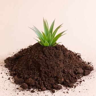 Композиция с маленьким растением