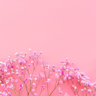 Arrangement with pink flowers on pink background