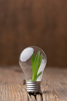 Arrangement with plant in light bulb