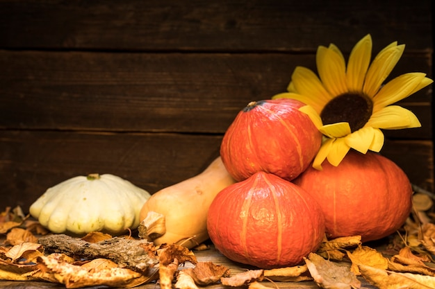 Arrangement with pumpkins and sunflower on wooden background