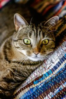 Высокомерная короткошерстная домашняя красивая полосатая кошка лежит на пушистом полосатом ковре