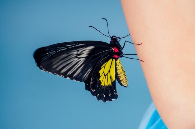 아트 사진 패션 모델 밝은 메이크업. 아름 다운 젊은 여자 녹색 눈과 라이브 나비 노란색 검은 날개 다채로운 balloon.sensual 클로즈업 초상화 완벽한 피부, 전문 메이크업 헤어 스타일