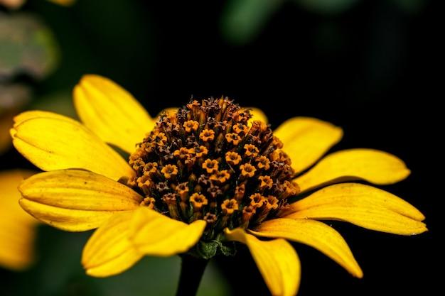 Художественная открытка макросъемка осеннего цветка в желто-зеленых тонах на темном фоне