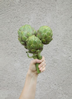 灰色の背景にアーティチョーク新鮮な有機アーティチョークの花を手に健康的な食事ホームガーデニング
