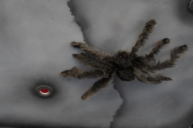 Искусственный большой черный паук хэллоуин фон с копией пространства
