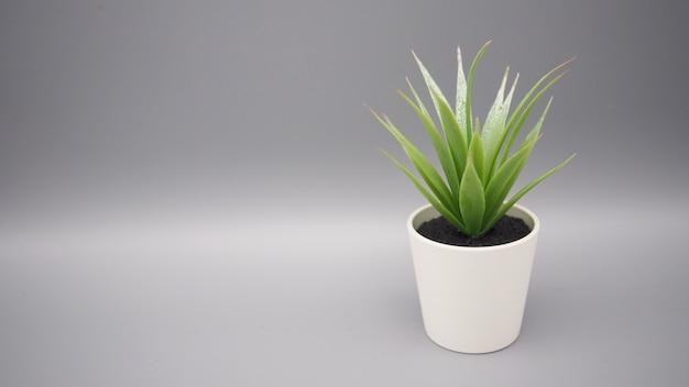 Искусственные растения кактусов или пластиковое или поддельное дерево на черном фоне.