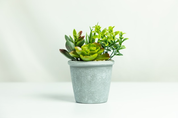 인공 꽃 식물 흰색 절연