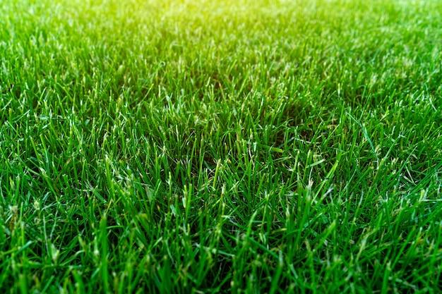 Искусственная зеленая трава текстуры фона.