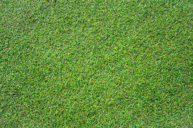 Artificial green grass texture with vintage filter can be use as background