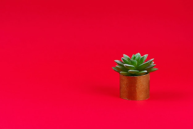 Artificial green succulent in a gold pot from toilet sleeve on a red burgundy background.