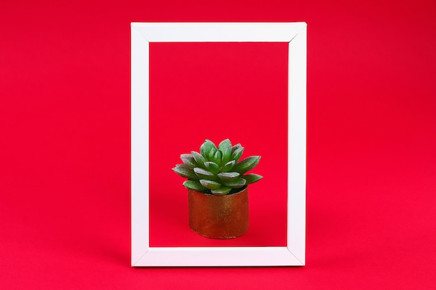 Artificial green succulent in golden pot toilet sleeve in white frame on red burgundy.