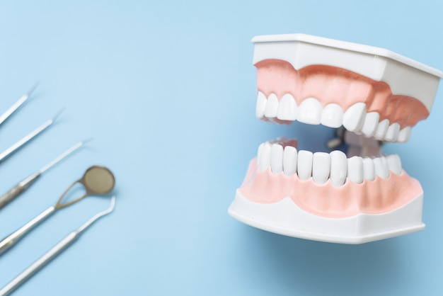 Artificial jaw and dental mirror, tweezers and probe