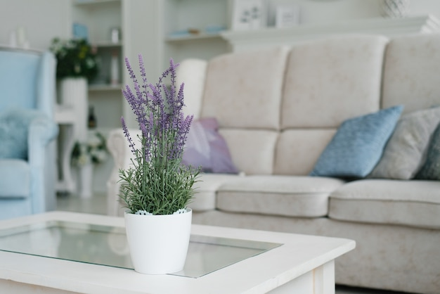 Artificial lavender flower in a white pot stands on a coffee table in the living room in the house.