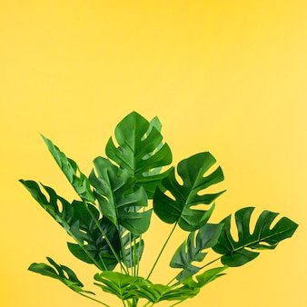 Artificial monstera leaves against yellow background