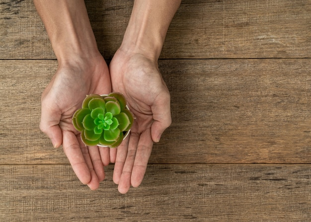 Artificial plant in a hand on wooden board background.
