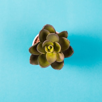 Искусственное растение в белом горшке на синем