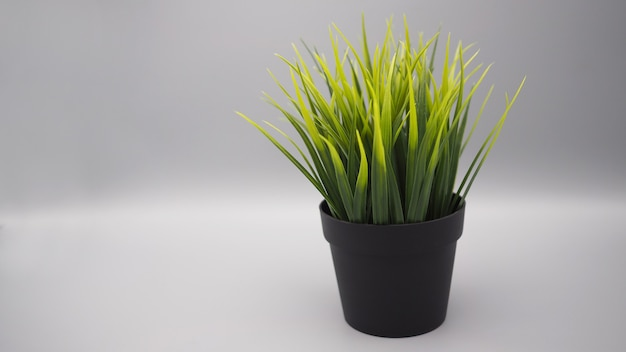 Искусственные растения или пластиковое или поддельное дерево на черном фоне.