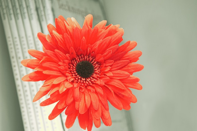 책과 책 선반의 벽에 인공 붉은 거베라 꽃