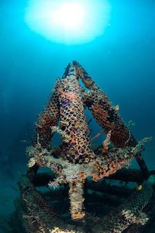 Artificial reef in mabul, kapalai, malaysia