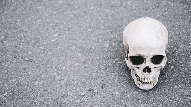 Artificial skull of man lying on asphalt on side