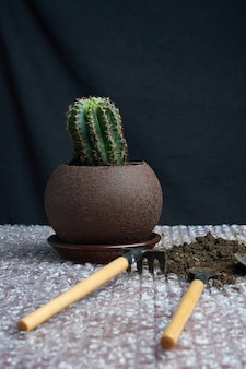 Artificial succulent plant in ceramic pot on counter with garden tools beside gray wall