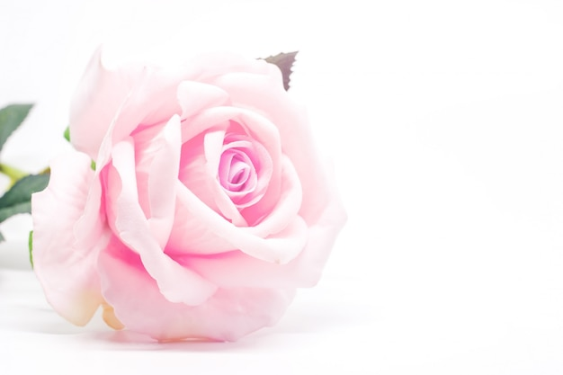 Artificial sweet pink rose for decoration on white