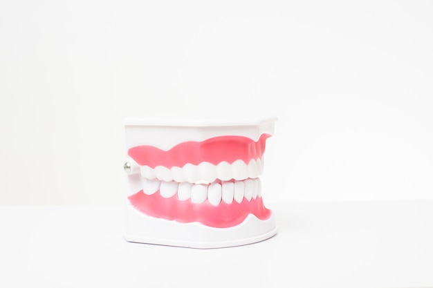 Artificial teeth model on white table