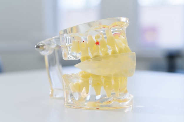 Artificial transparent jaw lies on the table