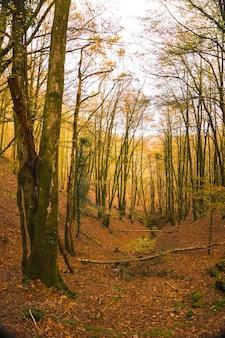 Artikutza forest in san sebastin, guipuzcoa, basque country. spain