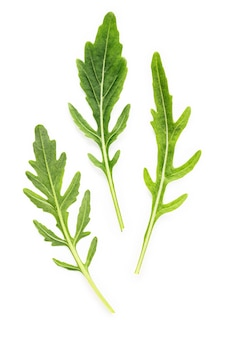 Arugula 잎 흰색 배경에 고립입니다. 근접 촬영 신선한 야생 로켓 흰색 배경 평면도에 나뭇잎.