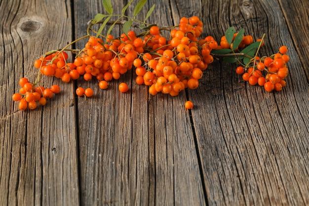 Ясень на деревянной предпосылке. осенняя ягода. гроздь рябины