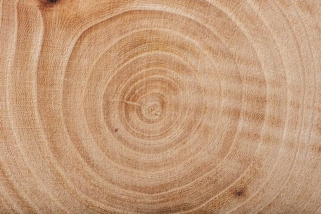 毎年恒例のリング、背景または壁紙と灰の木のスラブのテクスチャ。