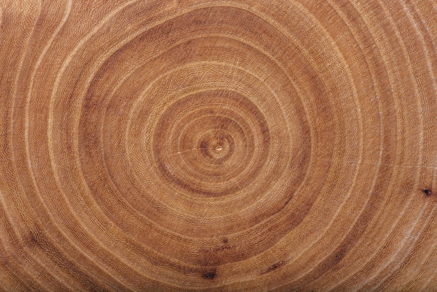 Ash wood slab texture with annual rings, background