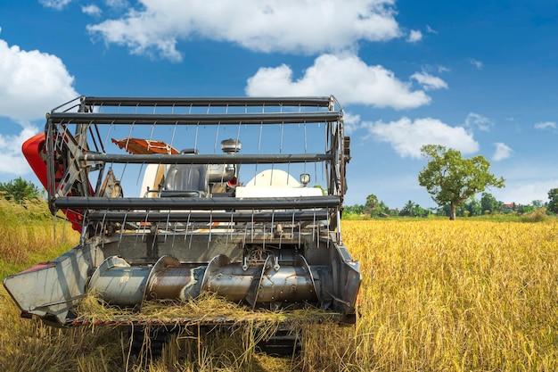 아시아와 수확기 농장에서 쌀 밀 수확