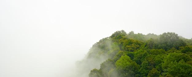 Азия лесной горный склон в низком облаке