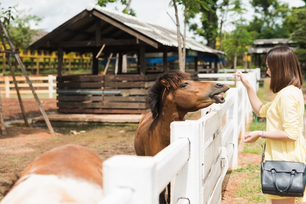 Asia girl playing with pony at zoo