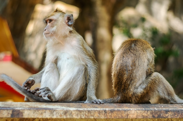 Asia monkey wildlife, care and family concept