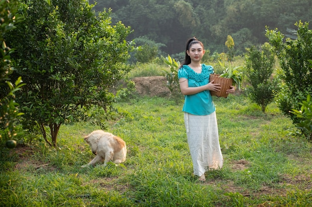 Asia woman smiling and carrying the basket thai  in the honey tangerine oranges garden