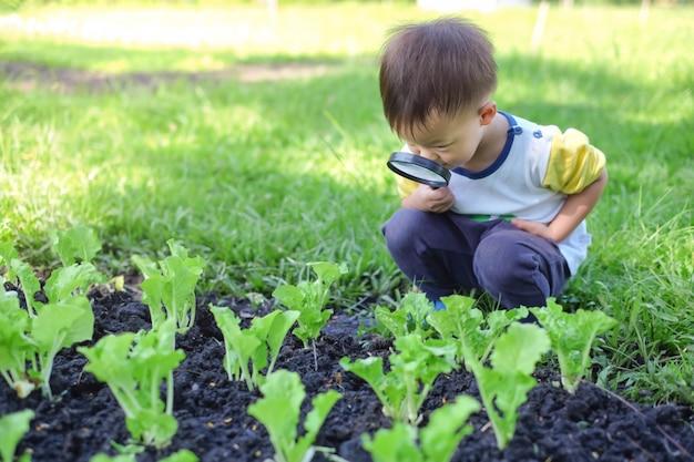 アジアの2〜3歳の幼児男の子の子供が晴れた日に虫眼鏡を通して環境を探索
