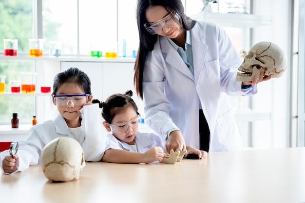 아시아 매력적인 여자 교사, 모델을 사용하여 여자 학생에게 과학을 가르치는 인간의 두개골