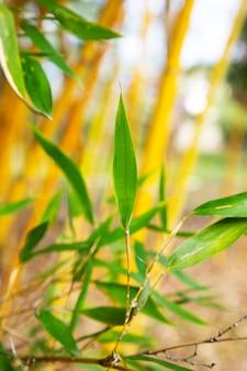 아시아 대나무 숲, 자연 배경 어린 잎이 있는 대나무 나뭇가지, 봄