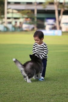 An asian boy is playing with a siberian puppy.