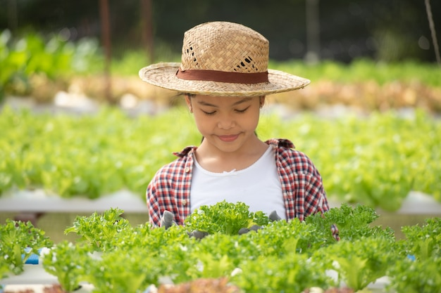 水耕栽培を持つアジアの子供。野菜を収穫する温室の少女。サラダを持つ子供。水耕栽培の家庭植栽と農業。若い女性のガーデニング葉物野菜。農業。