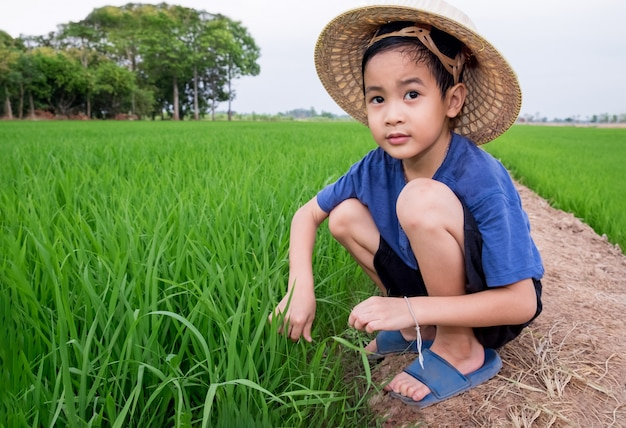 Asian children boy wear bamboo hat sitting plant rice at farm