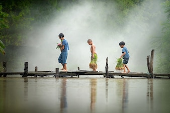 Asian children farmer on rice cross the wood bridge before the grown in paddy field.