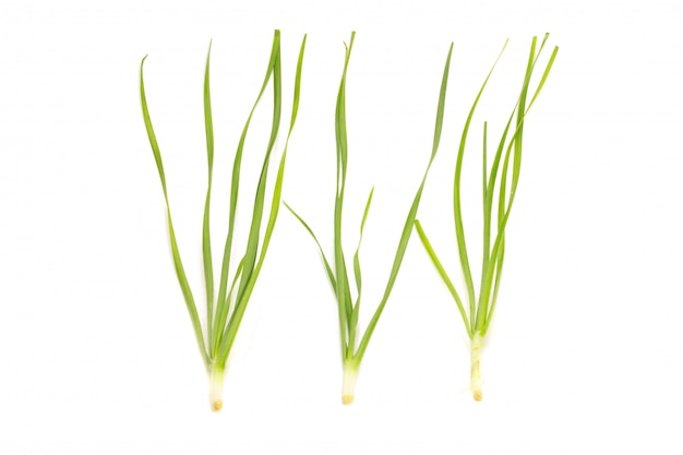 Asian chives (leek) isolated on white background