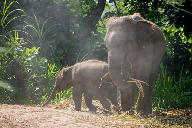 深い森で自然川のアジア象