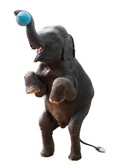 클리핑 패스와 흰 배경에 고립 된 농구 촬영 아시아 코끼리