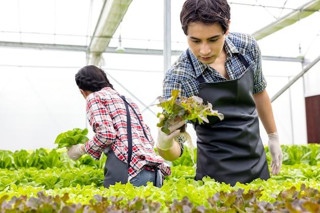 아시아 농부 부부는 행복하고 즐거운 식물 배경으로 수경 채소 온실 농장에서 일합니다.