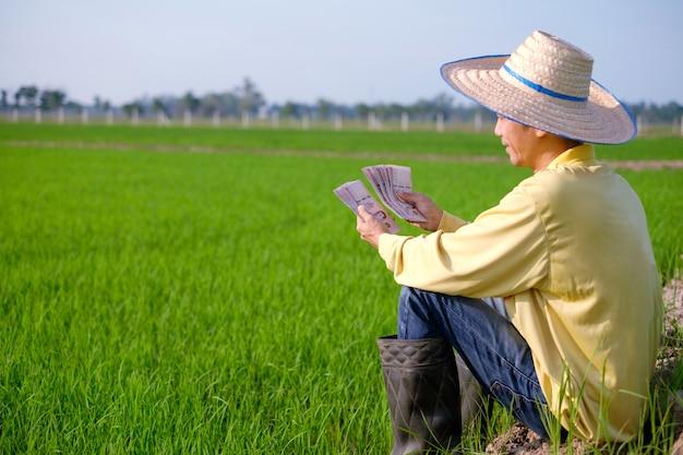 Asian farmer man wears yellow shirt sitting and holding thai banknote money at green rice farm.